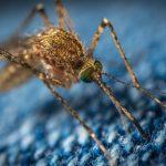 Malariavaccine kan spore og angribe kræftceller