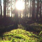 Omvendt fotosyntese til effektiv dannelse af biobrændstof