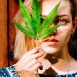 Dansk erhvervsliv er vilde med cannabis
