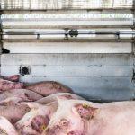 EU kulegraver dyretransporter i og ud af EU
