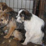Ulovlig handel med kæledyr i EU er omfattende