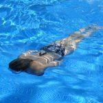 Nye svømmefaciliteter til op mod 60 millioner